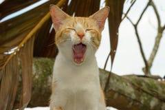 一只逗人喜爱的困矮小的公猫 选择聚焦,被弄脏的背景 免版税库存照片
