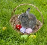 一只逗人喜爱的复活节兔子 图库摄影