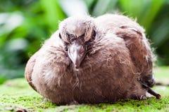 一只逗人喜爱的小棕色鸟的画象在庭院里 免版税库存图片