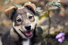 一只逗人喜爱的小狗的纵向 免版税图库摄影