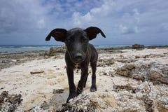 一只逗人喜爱的小狗的面孔在海滩法属玻里尼西亚的 免版税库存图片