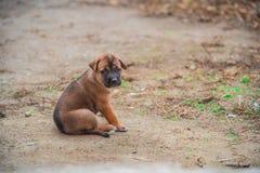 一只逗人喜爱的小狗的画象坐地面 库存图片