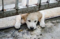 一只逗人喜爱的小狗通过使用,面孔的在篱芭下 库存照片
