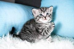一只逗人喜爱的小猫使用 免版税库存图片