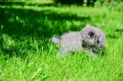 一只逗人喜爱的小猫学会采取第一个独立步骤 库存照片