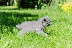 一只逗人喜爱的小猫学会采取第一个独立步骤 免版税库存图片