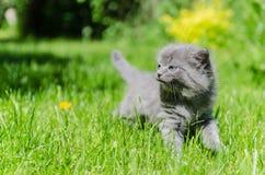 一只逗人喜爱的小猫学会采取第一个独立步骤 免版税库存照片