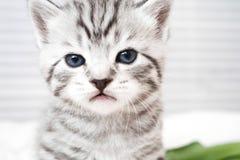 一只逗人喜爱的小猫的纵向 库存照片