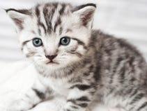 一只逗人喜爱的小猫的纵向 免版税库存图片