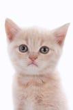 一只逗人喜爱的小猫的面孔 库存图片