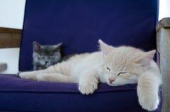 一只逗人喜爱的小猫/猫 库存图片