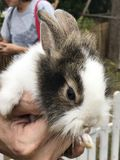 一只逗人喜爱的小的兔子 库存照片