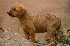 一只逗人喜爱的小的小狗的照片 免版税库存图片