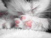 一只逗人喜爱的小的小猫在太阳的一张白色地毯睡觉 逗人喜爱的睡觉全部赌注特写镜头 图库摄影