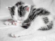 一只逗人喜爱的小的小猫在太阳的一张白色地毯睡觉 逗人喜爱的睡觉全部赌注 免版税图库摄影