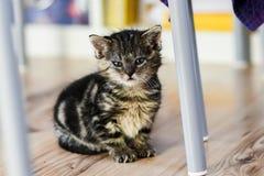 一只逗人喜爱的小的小猫在家坐地面 免版税库存图片