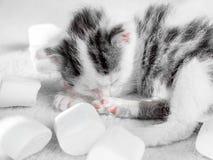 一只逗人喜爱的小的小猫在白色地毯蛋白软糖背景睡觉 逗人喜爱的睡觉全部赌注甜点nbackground 免版税库存照片
