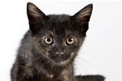 一只逗人喜爱的小的小猫的画象 免版税库存照片