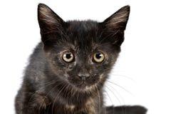 一只逗人喜爱的小的小猫的画象 库存图片