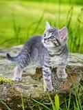 一只逗人喜爱的小的小猫 免版税库存照片