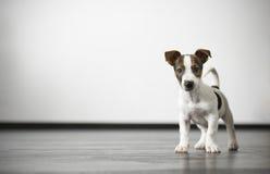 一只逗人喜爱的小的看家狗 免版税库存图片
