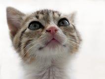 一只逗人喜爱的抢救小猫的画象 库存照片