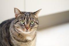 一只逗人喜爱的灰色小猫的画象,文本的空间 库存图片