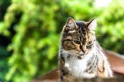 一只逗人喜爱的猫为画象摆在户外 免版税库存照片