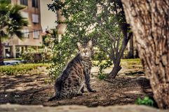 一只逗人喜爱的猫在庭院里 库存照片