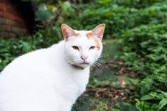 一只逗人喜爱的猫在庭院里 图库摄影