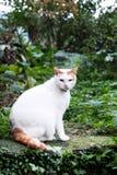 一只逗人喜爱的猫在庭院里 库存图片