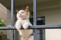 一只逗人喜爱的猫小狗的画象在后院的 免版税库存图片
