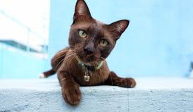 一只逗人喜爱的猫放下和看您蓝色backgroung的 库存照片