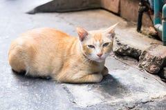 一只逗人喜爱的猫放下和看您 库存图片