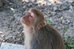 一只逗人喜爱的猴子在泰国的一个自然森林里生气,生活 免版税图库摄影