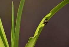 一只逗人喜爱的甲虫 免版税库存图片