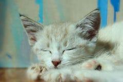 一只逗人喜爱的睡觉小猫的播种的射击 库存照片