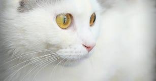 一只逗人喜爱的空白猫的纵向 库存照片