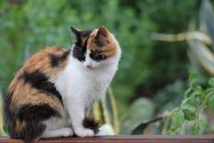 一只逗人喜爱的蓬松猫的画象 免版税库存照片