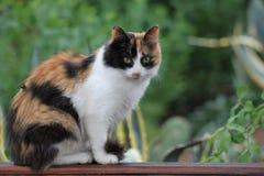 一只逗人喜爱的蓬松猫的画象 库存照片