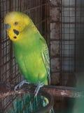 一只逗人喜爱的鸟 免版税库存照片
