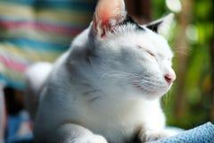 一只逗人喜爱的黑白猫坐窗口 免版税库存图片