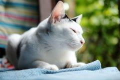 一只逗人喜爱的黑白猫坐窗口 免版税图库摄影