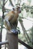 一只逗人喜爱的猴子在泰国的一个自然森林居住 免版税库存照片