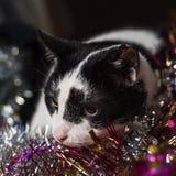 一只逗人喜爱,沉思的黑白猫在说谎多彩多姿的罐子 免版税库存照片