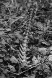 一只野生动物的脊椎在黑白的 免版税库存图片