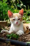 一只野生幼小小猫 免版税库存照片