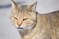 一只野生猫的画象 库存照片