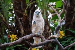 一只金刚鹦鹉在一个热带庭院里,嚼在花 库存照片