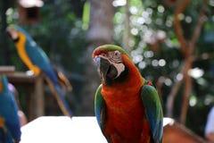 一只金刚鹦鹉在动物园里 库存图片